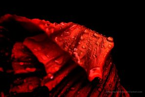 Blood Red by eschlehahn
