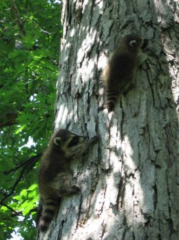 Two Babies in a Tree by mistic56