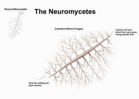 REP: The Neuromycetes by Ramul