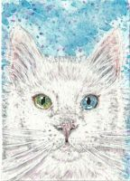 white  fluffy  cat  green  and blue eyes  aceo by tulipteardrops
