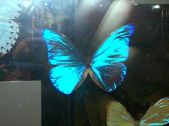 Blue translucent butterfly by Forbidden-dreams