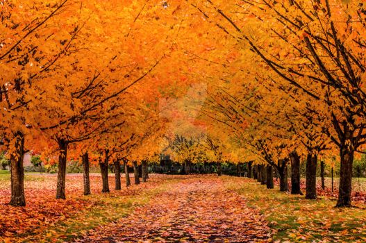 Autumn driveway by CNaene