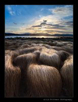 Wigs in line.... by uberfischer