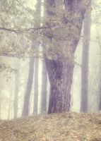 Misty Wood 2 by moonchild-lj-stock