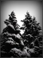 Wintery Pines by Ryser915