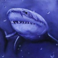 Purple Shark by crazycolleeny
