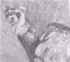 Ferret by Readsway2much