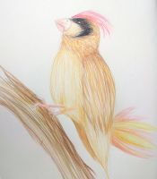 Realistic Pidgeotto by needs-a-bullet
