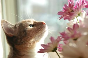 Smelling the flowers by Vironevaeh