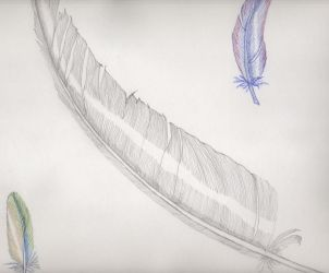 feathers by melydia
