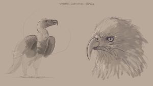 Dynamic Sketching - Birds 01 by A-Seed