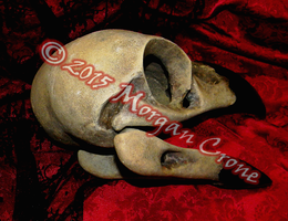 Giant Crow Skull by MorganCrone