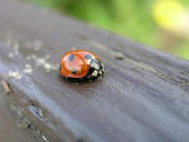 Lady Bug by Dowlphin