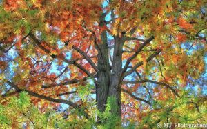 the autumn shows beautiful colors 4 by MT-Photografien