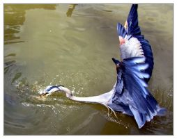 Heron Attack by evaPM
