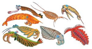 Anomalocaris group by NocturnalSea