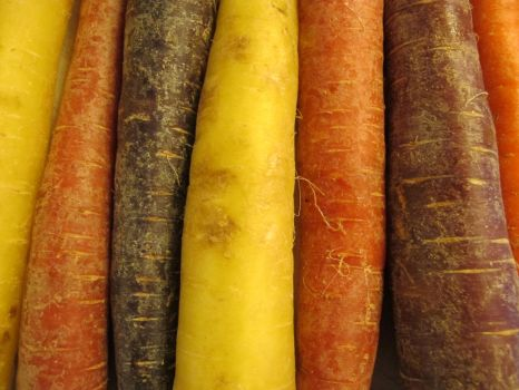 A Rainbow of Carrots 3 by Windthin