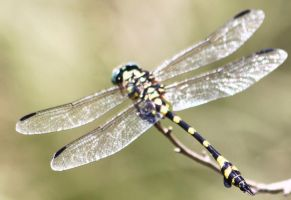 dragon fly 4565 by craigp-photography