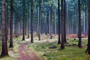 Forrest HDR by LoveForDetails