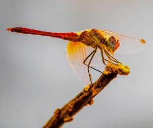 Dragonfly by MikeHeard