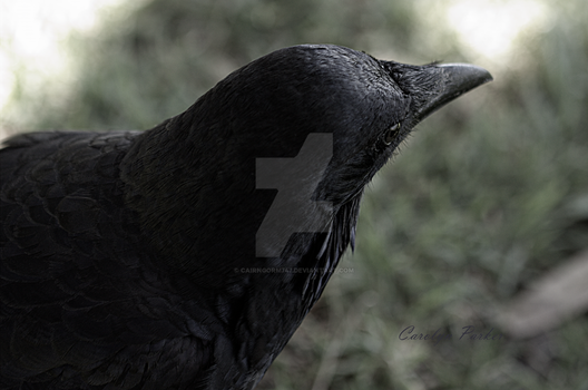 Ravens Intrigue 5062 by Cairngorm747