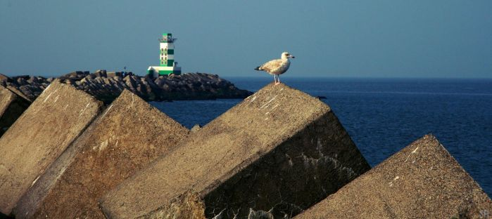 SEAGULL 3 by scifilicious