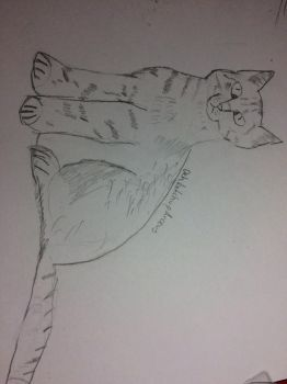 Realistic cat drawing by DehketchupArceus