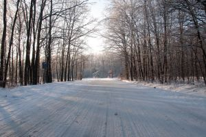 Winter forest road by vertiser