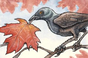 Grackle and Maple by angelac