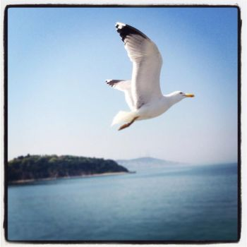 Seagull above the island by freakme