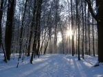 winter forest by Meltys-stock