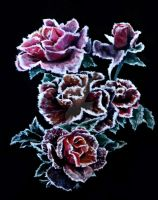 Frosted Roses by H3lloGalaxy