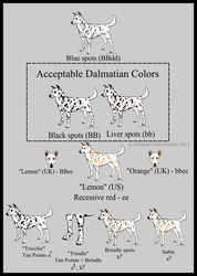 Dalmatian Colors by Xenothere
