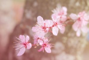 Plum Blossom by HappyClementine