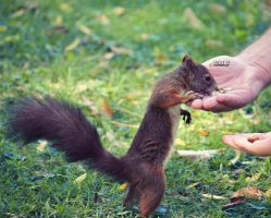 thx for the nuts, human! by lisarime
