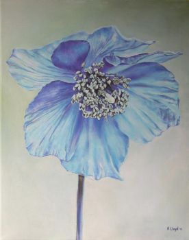 Blue Poppy by andylloyd