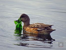 Duck With Seaweed by wolfwings1