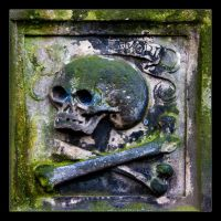 skulls gather moss by LordLJCornellPhotos
