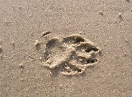 footprint 02: dog in sand by cyborgsuzystock