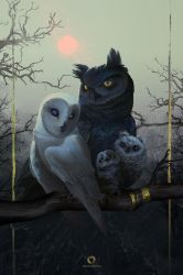 Owl Family Portrait by EranFowler