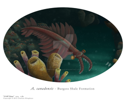 'Cliff Diver' A. canadensis Burgess Shale Form. by ChenoaEllinghaus