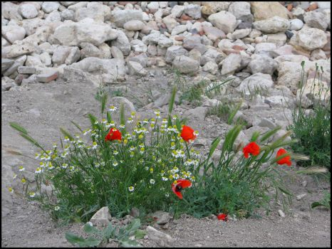 Flowerbed near the sea by Anais07
