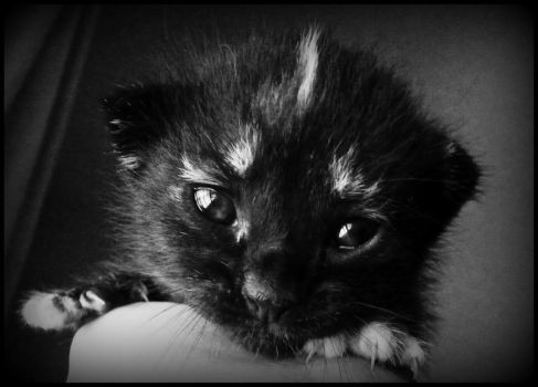 Baby Tortie by MiDulceLocura