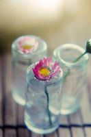 daisy in a bottle by BlueColoursOfNature