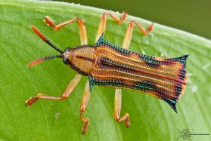 Leaf beetle by ColinHuttonPhoto