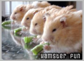 hamster fun by riluciel