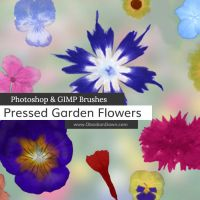 Pressed Garden Flowers Photoshop and GIMP Brushes by redheadstock