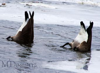 Duck Duck Geese by 33M