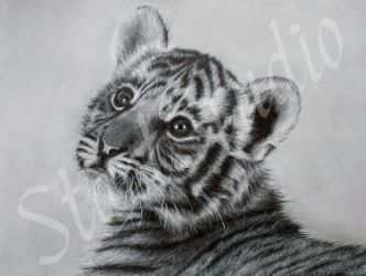 Tiger cub drawing by JamiePickering