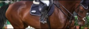 HEE Stable Banner | Superior Equines by Elegant-Designs